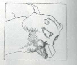 Maoz 1995: plate 24 fig. 5, courtesy of Zvi Maoz © <i> synagogues.kinneret.ac.il </i>