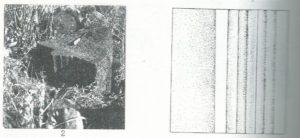 Maoz 1995: plate 23 fig. 2, courtesy of Zvi Maoz © <i> synagogues.kinneret.ac.il </i>