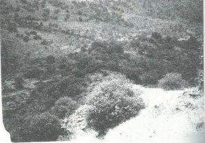 מעוז 1995: לוח 1:119, באדיבות צבי מעוז © <i> synagogues.kinneret.ac.il </i>